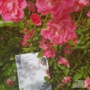 Les indifférents de Julien Dufresne Lamy (éditions Belfond)